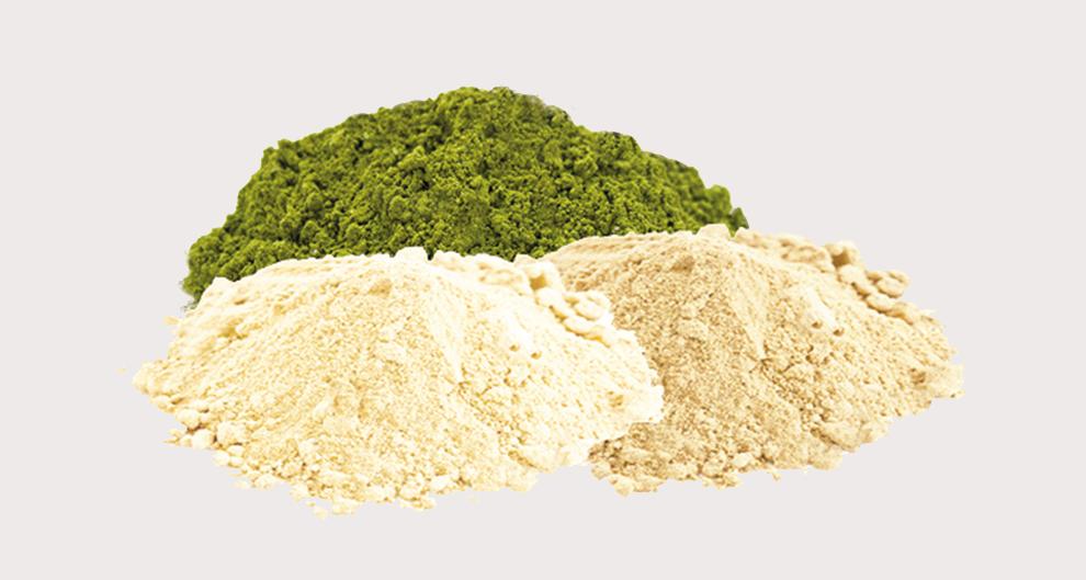 Pflanzliche Proteine wie Reis oder Hanf liefern sehr hochwertiges Protein